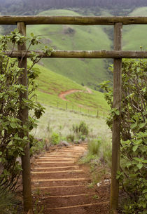 Misty valley scene and wooden steps, iXopo, KwaZulu-Natal, S... by Danita Delimont