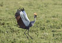 Africa, Tanzania, Ngorongoro Crater von Danita Delimont