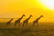 Africa, Tanzania, Serengeti by Danita Delimont