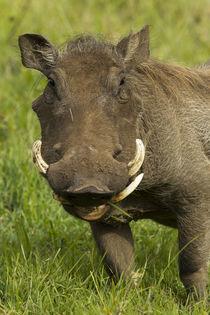 Africa, Tanzania, Serengeti National Park, Ngorongoro Crater... by Danita Delimont
