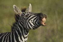Africa, Tanzania, Serengeti National Park, Ngorongoro Crater... von Danita Delimont