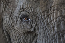 Africa, Zambia von Danita Delimont