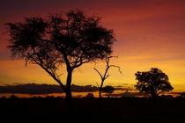 Sunset from Ngweshla Camp, Hwange National Park, Zimbabwe, Africa von Danita Delimont