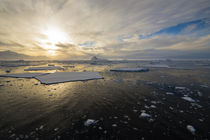 Near Adelaide Island. The Gullet. Ice floes at sunset. by Danita Delimont