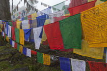 Prayer flags at the top of Dochula, a mountain pass. by Danita Delimont
