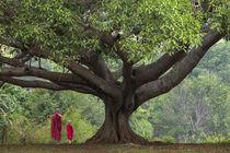 Myanmar, Pindaya by Danita Delimont
