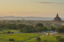 Bagan. Horse carts and a herd of cattle walk the roads at sunset. by Danita Delimont