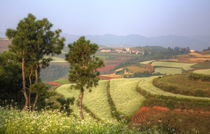 China,Kunming Dongchuan Red Land area landscape of crop land... by Danita Delimont