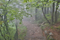 Trail in Fog, Yellow Mountains a UNESCO World Heritage Site by Danita Delimont