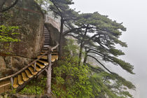 Trail in Fog, Yellow Mountains a UNESCO World Heritage Site von Danita Delimont