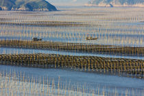 Fishing boat sailing through bamboo sticks in the seaweed fa... von Danita Delimont