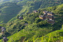 Village house and rice terraces in the mountain, Longsheng, ... by Danita Delimont