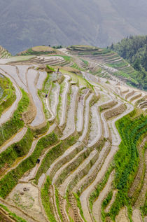 Dragon Spine Rice Terraces, Longsheng, China. von Danita Delimont