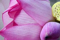 Pink Lotus Petal Bud Hong Kong Flower Market by Danita Delimont