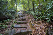 Hong Kong, Tai Po Kau Nature Park, a jungle trail with stone... by Danita Delimont