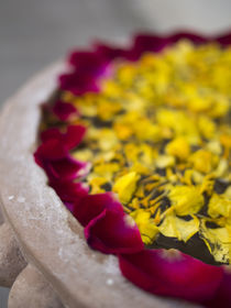 Flower petals floating on water surface in Udaipur, Rajasthan, India. by Danita Delimont