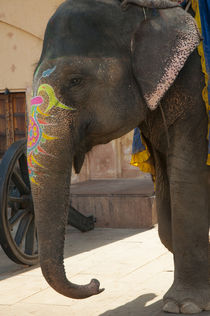 Decorated elephant, Amber Fort, Jaipur, Rajasthan, India. von Danita Delimont