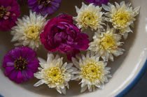 Flowers in a bowl of water, Rawal Jojawar Hotel, Jojawar, Ra... by Danita Delimont