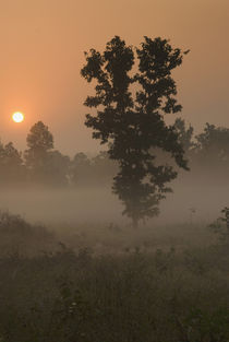 Kanha NP, India by Danita Delimont