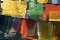 Buddhist prayer flags, Bodh Gaya, Bihar, India by Danita Delimont