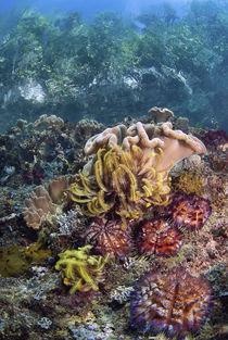 Indonesia, Papua, Raja Ampat by Danita Delimont