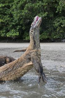 Indonesia, Rinca Island, Komodo National Park von Danita Delimont