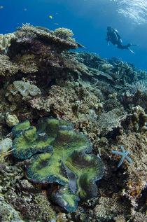 Indonesia, West Papua, Cenderawasih Bay von Danita Delimont