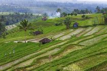 Water-filled rice terraces, Bali island, Indonesia von Danita Delimont