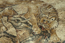 Israel, Lower Galilee, floor mosaic of a tiger attacking a c... von Danita Delimont