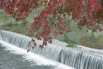 Maple Leaves and Waterfall von Danita Delimont