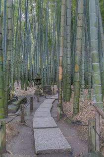 Hokokuji Temple Garden by Danita Delimont