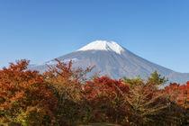 Mt. Fuji by Danita Delimont