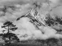 Nepal, Himalayas Mountain and Tree von Danita Delimont