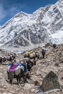 Yaks and herders on trail to Everest Base Camp. von Danita Delimont