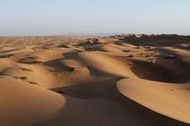 Wahiba Sands desert, Oman von Danita Delimont