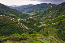 The Rice Terraces of the Philippine Cordilleras, UNESCO Worl... von Danita Delimont