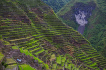 Batad rice terraces, part of the World Heritage Site Banaue,... von Danita Delimont