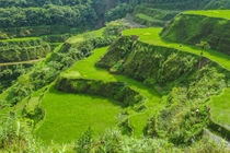 Hapao Rice Terraces, part of the World Heritage Site Banaue,... von Danita Delimont