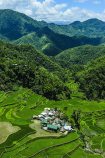 Bangaan in the rice terraces of Banaue, Northern Luzon, Philippines by Danita Delimont