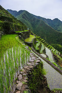 Batad rice terraces, World Heritage Site, Banaue, Luzon, Philippines by Danita Delimont