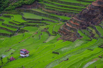 Batad rice terraces, World Heritage Site, Banaue, Luzon, Philippines von Danita Delimont