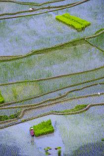 Unesco World Heritage Site, Rice Terraces of Banaue, Norther... von Danita Delimont