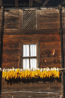 Corn hung to dry outside of wooden house, Rize, Black Sea re... von Danita Delimont