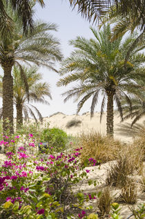 Bab Al Shams Desert Resort and Spa von Danita Delimont