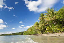 Beach, Cape Tribulation, Daintree National Park, Queensland, Aus by Danita Delimont
