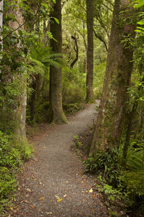 Track to Purakaunui Falls, Catlins, South Otago, South Islan... by Danita Delimont