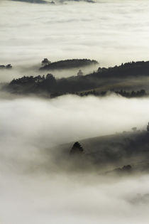 Fog over Otago Harbour and Otago Peninsula, Dunedin, South I... by Danita Delimont