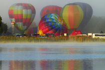 Hot air balloons, Balloons over Waikato Festival, Lake Rotor... by Danita Delimont