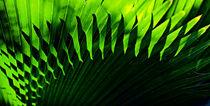 Backlit fern, Falmouth Harbor von Danita Delimont