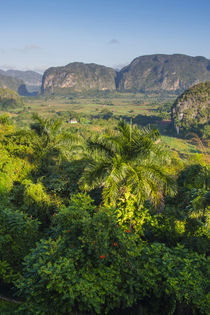 Pinar del Rio. Vinales. The Vinales valley in the early morning. von Danita Delimont